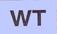 CCMNp14BBk-WT.jpg